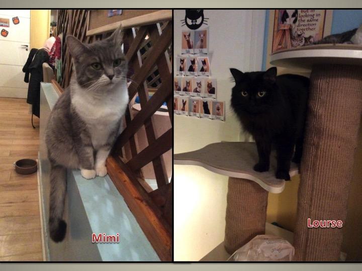 Mimi & Louise