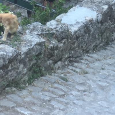 A Kotor, en Croatie