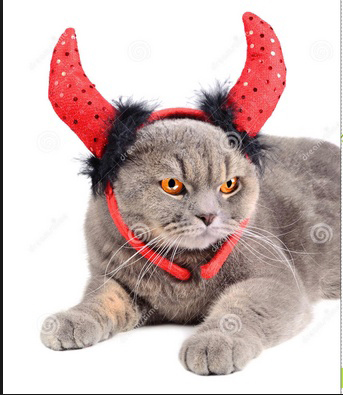 Chat diable rouge